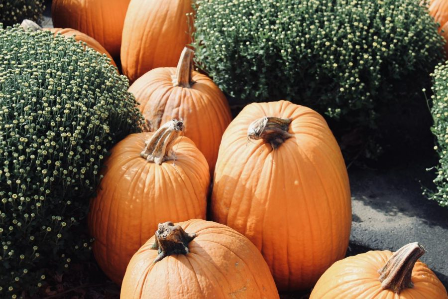 At+Frank%27s+Farm+Market+%285880+Sterrettania+Rd.%29+has+a+parking+lot+full+of+pumpkins+and+fall+flowers+for+everyone+who+celebrates+Halloween%2C+especially+for+the+tradition+to+carve+a+pumpkin+and+light+it+up.